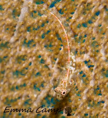 emma camp fish 1