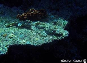 scorpian fisha